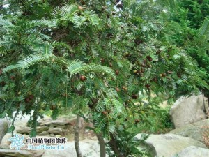 sanjianshan4